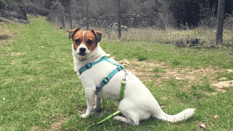 perro campo montaña