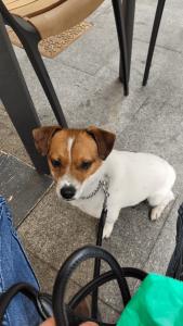 adiestrador perros perro